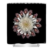 Rendezvous Shower Curtain