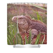 Reptile Land  Shower Curtain