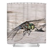 Rescued Dragonfly Shower Curtain