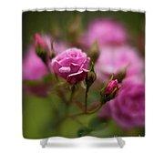 Resplendent Roses Shower Curtain