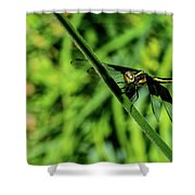 Resting Alert Dragonfly Shower Curtain