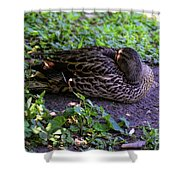 Resting But Alert Shower Curtain