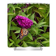 Resting Butterfly 1 Shower Curtain