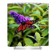 Resting Butterfly 2 Shower Curtain
