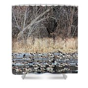 Resting Canadian Geese Shower Curtain