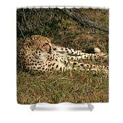 Resting Cheetah Shower Curtain