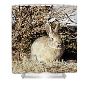 Resting Cottontail Shower Curtain