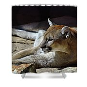 Resting Cougar Shower Curtain