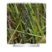 Resting Darner Shower Curtain