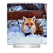Resting Fox Shower Curtain