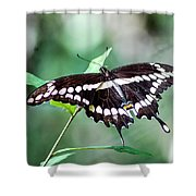 Resting Giant Shower Curtain