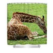 Resting Giraffe Shower Curtain