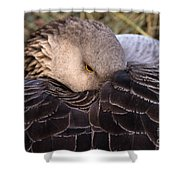 Resting Goose Shower Curtain