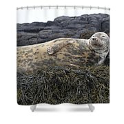 Resting Gray Seal On Seaweed Shower Curtain