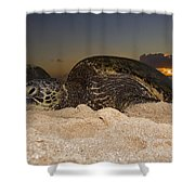Resting Green Sea Turtle Shower Curtain
