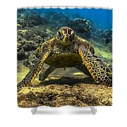 Resting Honu Shower Curtain