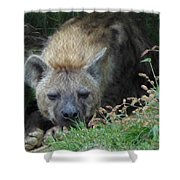 Resting Hyena Shower Curtain