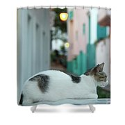 Resting Kitten  Shower Curtain