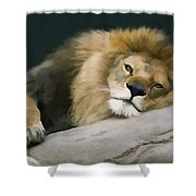 Resting Lion Shower Curtain