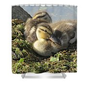 Resting On The Lake Shore. Shower Curtain