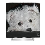 Resting Puppy Shower Curtain