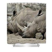 Resting Rhinos Shower Curtain
