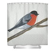 Resting Robin Shower Curtain