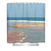 Resting Seagulls On A Sandbar Shower Curtain