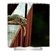 Resting Squirrel Shower Curtain by  Onyonet  Photo Studios