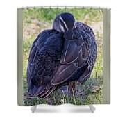 Resting Standing Up Shower Curtain