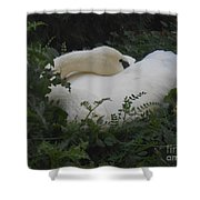 Resting Swan Shower Curtain