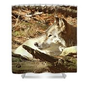 Resting Wolf Shower Curtain