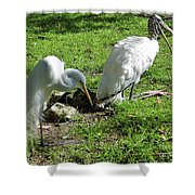 Resting Wood Stork And White Egret Shower Curtain