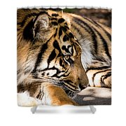 Resting Yet Watchful Tiger Shower Curtain