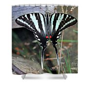 Resting Zebra Swallowtail Butterfly Shower Curtain