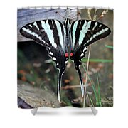 Resting Zebra Swallowtail Butterfly Square Shower Curtain