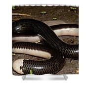Reticulate Worm Snake Shower Curtain
