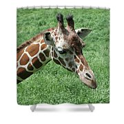 Reticulated Giraffe #3 Shower Curtain