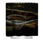Reticulated Python Shower Curtain