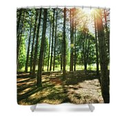 Retzer Nature Center Pine Trees Shower Curtain