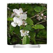 Rhineland-palatinate Pear Blossoms Shower Curtain