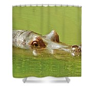 Rhino Shower Curtain