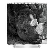 Rhino Nap Shower Curtain