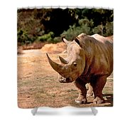 Rhino Shower Curtain by Steve Karol