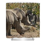 Rhinos,  Zambia Shower Curtain