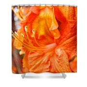 Rhodies Art Prints Orange Rhododendron Flowers Baslee Troutman Shower Curtain