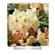 Rhodies Creamy Yellow Orange 3 Rhododendrums Gardens Art Baslee Troutman Shower Curtain
