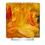Rhodies Orange Yellow Rhododendrons Art Prints Canvas Baslee Troutman Shower Curtain