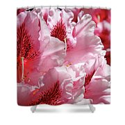 Rhodies Pink Fine Art Photography Rhododendrons Baslee Troutman Shower Curtain