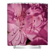 Rhododendron-close Up Shower Curtain